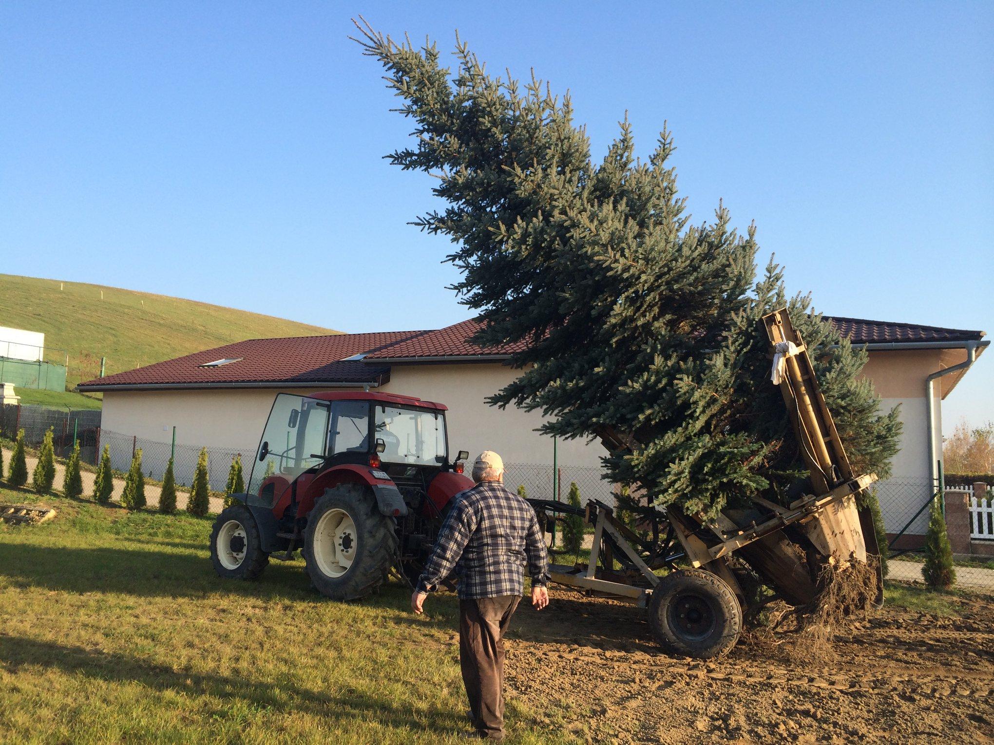 Presádzanie veľkých stromov