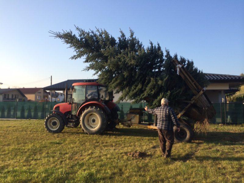 Zasadenie stromčeka